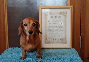 14歳半。長寿犬表彰状を頂きました。
